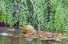 Snail fountain